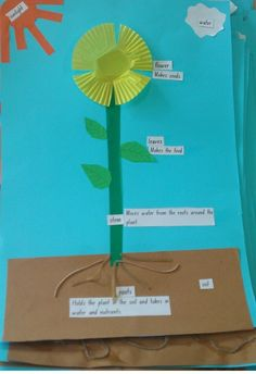 Plants/ Living Things Unit Flourishing in Kindergarten: September 2012