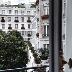 Hotel Le Bristol Paris...charmingness outside our hotel room 🔑 (...ACTIVELY searching for the two cats who reside here)