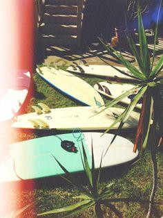 Boards & palms.