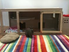 Indoor housing  Rabbits United Forum