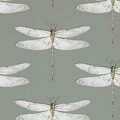 Buy Harlequin Demoiselle Graphite-Almond 111242 from the extensive range of Harlequin at Select Wallpaper. Cloakroom Wallpaper, Wallpaper Toilet, Funky Wallpaper, Hallway Wallpaper, Harlequin Wallpaper, Fabric Wallpaper, Pattern Wallpaper, Kitchen Wallpaper Feature Wall, Feature Wallpaper