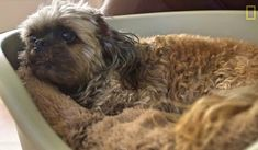 This National Geographic video gives you a peek inside a dog retirement home: House With A Heart Senior Pet Sanctuary