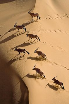 Gemsbok Herd by Michael Poliza on 500px