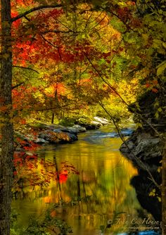 djferreira224:  Autumn Afternoon ~© Copyright John C. House, Everyday Miracles Photography. Cherokee National Forest.