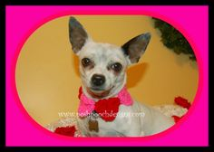 Starting the NEW Year With a Contest!  Make your dog or any pet a collar from this crochet pattern -Conversation Hearts   CLICK THE PIC OR LINK FOR ALL THE DETAILS!! Collarhttp://poshpoochdesignsdogclothes.blogspot.com/2015/01/starting-new-year-with-contest.html