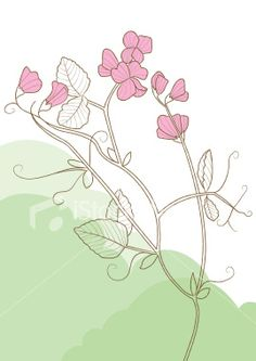 Sweet Pea Flowers Royalty Free Stock Vector Art Illustration