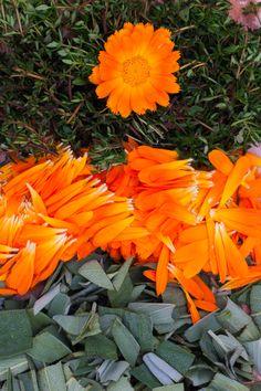 W codziennym życiu kieruję się zasadą, że to co najprostsze jest najdoskonalsze. I najbardziej przyjazne. Dla mnie i dla środowiska. Nie lubię nadmiaru w żadnej sferze mojego życia. Z upływem lat u… Slim Body, Natural Remedies, Herbs, Health, Nature, Plants, Diet, Florals, Naturaleza