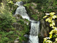 Tribreg, Black, Forest, Waterfall in summer