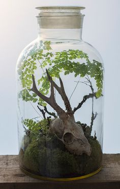 Beautiful terrariums with fossils, skulls, and other oddities by Ken Martin of Hermetica (London).