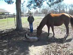 The sneezing baby horse