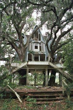 Abandoned tree house.
