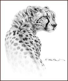 Gepard Wildlife Art, Crayon, Cheetah Drawing, Cheetah Tattoo, Cat Drawing, Drawing Sketches, Pencil Drawings Of Animals, Animal Sketches, Drawings Of Cats