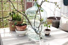 Den som inte har grönska precis inpå knuten fixar enkelt sin egen med hjälp av vackra växter som får slingra, gro och blomma ikapp med sommaren.