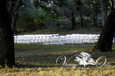 South Texas outdoor wedding venue with tall Oak trees and open spaces for ceremony and reception. Perfect for any vintage, rustic, country chic, classic, elegant, or modern wedding themes. Vintage Oaks Events www.vintageoaksevents.com