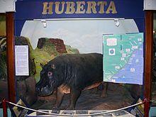 Huberta Hippopotamus Wikipedia African History Out Of Africa Natal Mercury