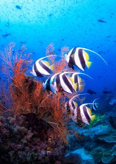 By Scotty Graham...Indonesia, Papua, Raja Ampat, underwater