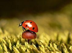 Ladybird Perch