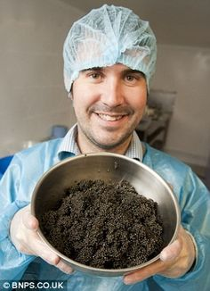 Harry Ferguson from the London Fine food company with one of the first crop of British caviar at the farm. The Exmoor Caviar Company has rec. Beluga Sturgeon, Beluga Caviar, Caviar Recipes, Food Company, Fish Farming, One Fish, Whitefish, Top Restaurants, Russian Recipes
