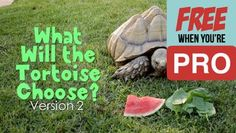 What Will the Tortoise Choose [Version 2] Crowd Breaker Game – KidzMatter Lets Play A Game, Guessing Games, Free Games, Tortoise, Crowd, Tortoise Turtle, Turtle, Riddles, Turtles