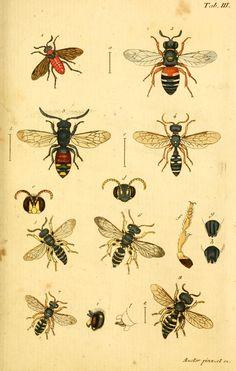c.1 - Verzeichniss meiner Insecten-Sammlung / - Biodiversity Heritage Library