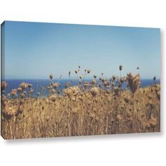 ArtWall John Black Close Up Field Gallery-Wrapped Canvas, Size: 24 x 36, Brown