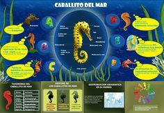 infografia-2caballito-de-mar-final