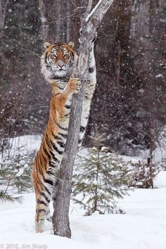 Wildlife Photography Workshops Winter Wildlife Photography Workshop
