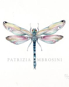 Image result for dragonfly drawing