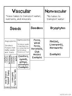 classification of plants education pinterest science 4th grade science and 5th grade science. Black Bedroom Furniture Sets. Home Design Ideas