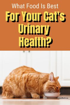 Discover some of the best urinary tract cat food to support your feline friend's urinary health. #besturinarytractcatfood #urinarytractcatfood #catfoodforurinaryhealth #bestcatfoodforurinaryhealth Cat Nutrition, Proper Nutrition, Cat Health, Health Tips, Cystitis, Cat Food, Health And Beauty, Fur Babies, Pets
