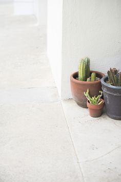 Cacti | Cindy Loughridge Photography