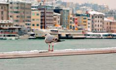 gull by YilmazKendirli via http://ift.tt/2kKbACp