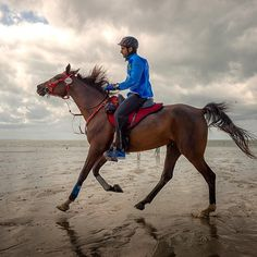 8/28/14 Sheikh Hamdan bin MOhammed Al Maktoum in the Alltech FEI World Equestrian Games-Endurance Race 160km in Normandy, France.  Photo: f3