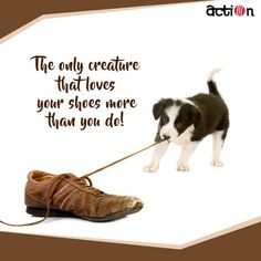 You can buy all the toys in the world and yet your dog only plays with your shoes!