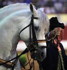 Resultado de imagen de como bailan los caballos andaluces
