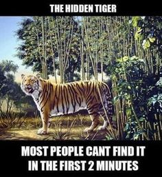Funny pictures about Find The Hidden Tiger. Oh, and cool pics about Find The Hidden Tiger. Also, Find The Hidden Tiger photos. Funny Animal Memes, Funny Animal Pictures, Funny Photos, Funny Images, Funny Animals, Funny Humor, Memes Humor, Hilarious Jokes, Bing Images