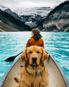 @aspenthemountainpup | 7 Pets of Instagram Who Travel Better Than We Do