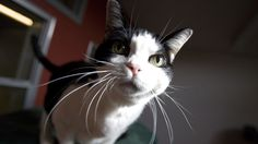 The bill would allow cats to be declawed only if medically necessary.