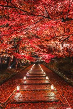 andi_B : tumblr — benrogerswpg:   Kyoto, Japan, Travel  via Ben...