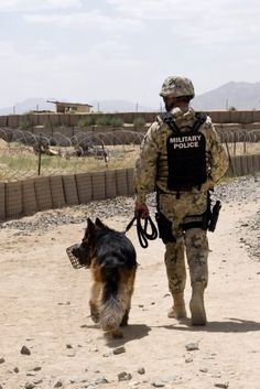 God Bless our human heroes & our animal heroes Military Working Dogs, Military Dogs, Military Photos, Police Dogs, Military Police, German Shepherd Dogs, German Shepherds, Work With Animals, War Dogs