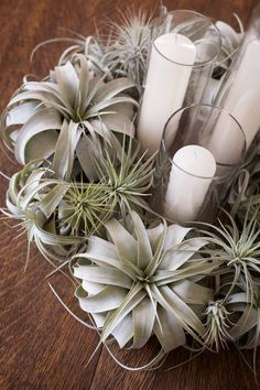 air plants and candles- simple and elegant organic decor