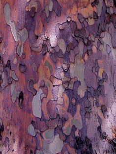 Tree Abstract acrylic art print ~ a close-up photograph of the colorful bark of… Abstract Canvas, Canvas Art, Canvas Prints, Art Prints, Abstract Print, Patterns In Nature, Textures Patterns, Art Grunge, Tree Bark