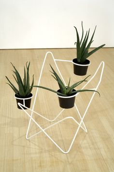 Jorge Luis, 2006-2007  Butterfly chair, steel, electromagnetic paint and Agave plants