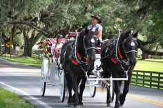 5. Horse Country Carriage Co & Tours, Ocala