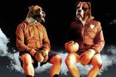 'Boxers'