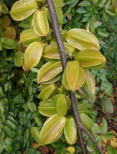 Starfruit click to Enlarge