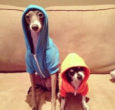 I need to find these for Ollie & Chloe. After all, they are in their teens via human years.