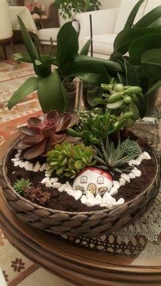 Succulent&cactus