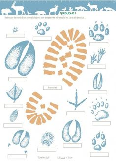 footprints Nature Activities, Science Activities, Activities For Kids, Outdoor Education, Kids Education, Biology Lessons, Animal Tracks, 242, Environmental Education