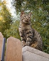 """natural cat repellents - not a fan of the """"presents"""" the neighborhood stray leaves in our yard..."""